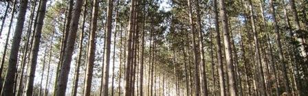 Ganaraska Forest: Yellow Trail