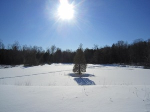 Heber Down Conservation Area: Devil's Den Pond frozen over