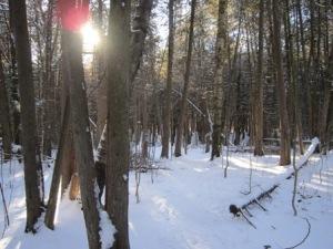Greenwood Conservation Area: Bird Walk Trail