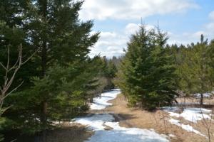 Long-Sault-Conservation-Area-Cottontail-Rabbit-Trail