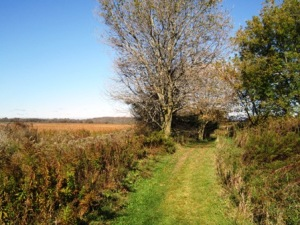 McLaughlin Bay Wildlife Reserve: Cool Hollow Trail, overlooking Second Marsh