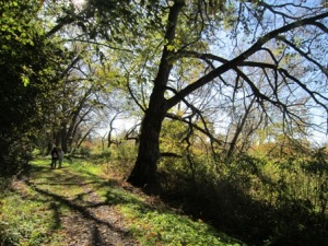 McLaughlin Bay Wildlife Reserve: Cool Hollow Trail