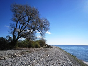 McLaughlin Bay Wildlife Reserve: Shoreline Trail, overlooking Lake Ontario