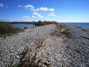 McLaughlin Bay Wildlife Reserve: Shoreline Trail, overlooking McLaughlin Bay and Lake Ontario