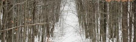 Durham-Regional-Forest-Steep-Hill-Shortcut