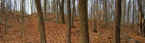 Oak Ridges Moraine Trail: Scugog West: Hill