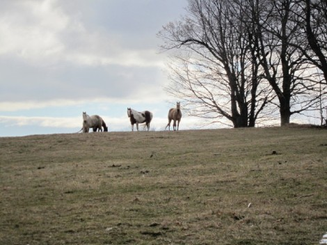 Oak Ridges Moraine Trail: Scugog West: Horses