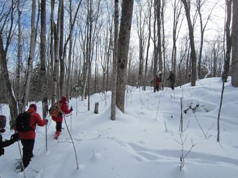 Lake Julian: Snowshoe: Climbing Hill