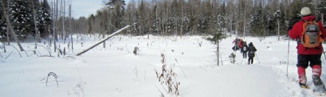 Lake Julian: Snowshoe: Crossing Swamp
