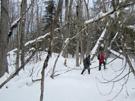 Lake Julian: Snowshoe: Forest
