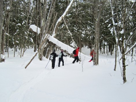 Lake Julian: Snowshoe: Tree aDown